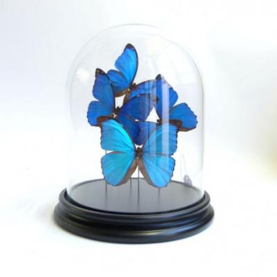 Campana di vetro con farfalle blu